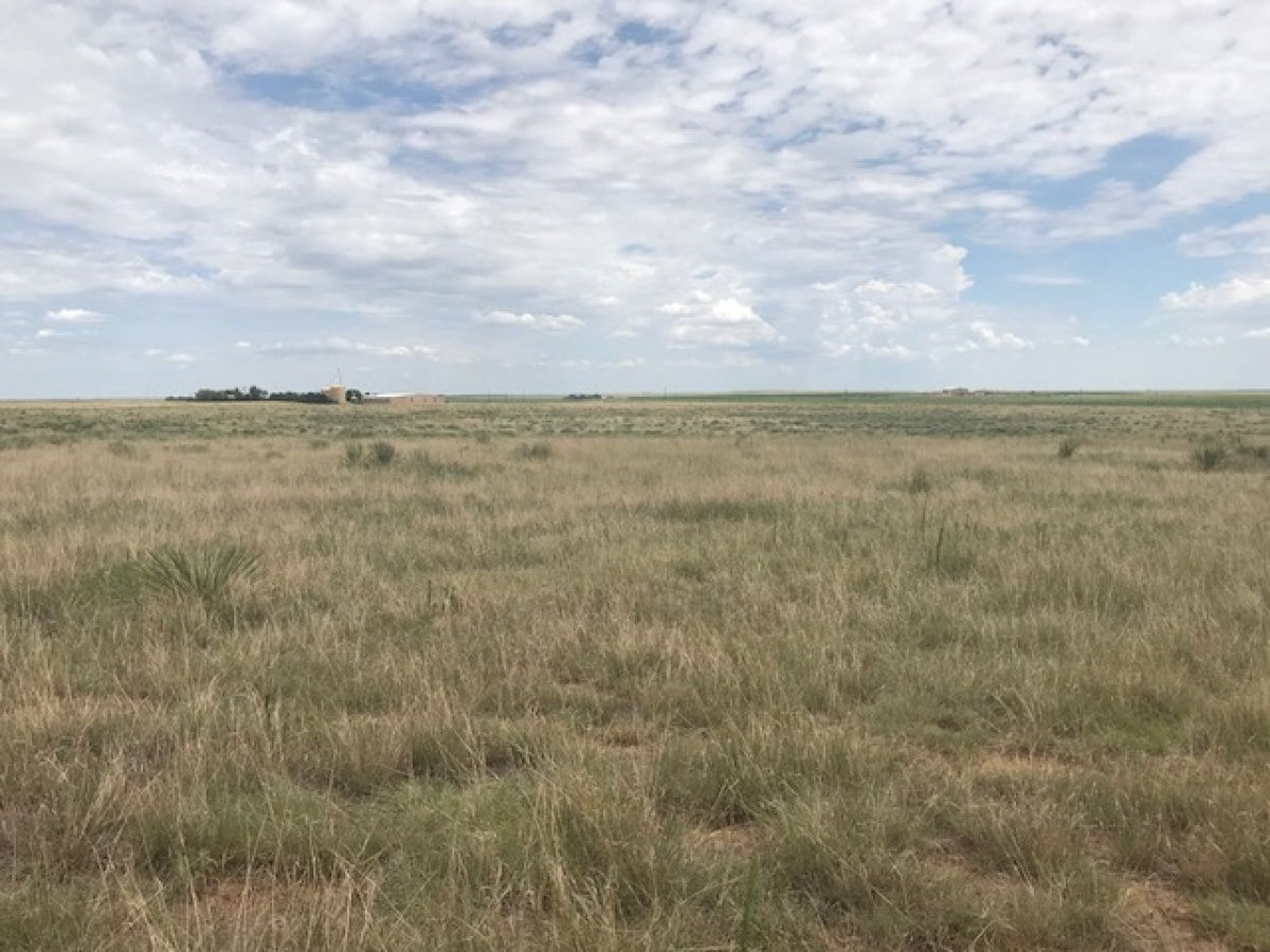 FM 296,Texline,Dallam,Texas,United States 79087,Undeveloped Property,FM 296,1144